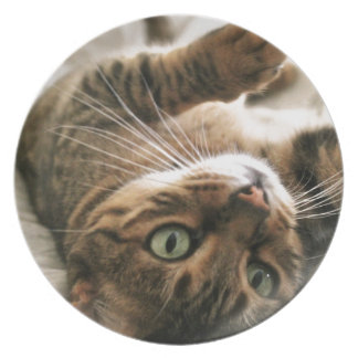 Cute Brown Spotted Bengal Cat Kitten Lying in Bed Party Plates