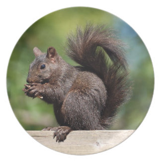 Cute Brown Squirrel on a Wooden Railing Party Plates