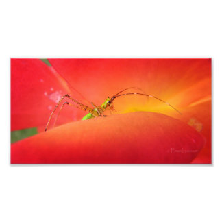 Cute Bug in a Red Orange Rose Flower Photograph
