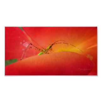 Cute Bug in a Red Orange Rose Flower Poster