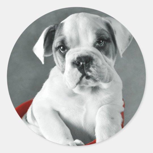 Cute Bulldog Puppy Classic Round Sticker