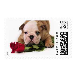 Cute Bulldog Puppy Postage Stamps