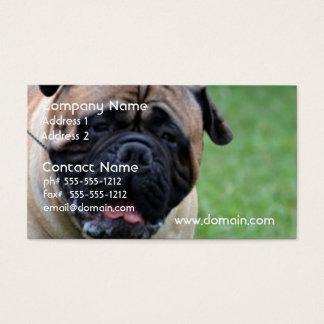 Cute Bullmastiff Business Card