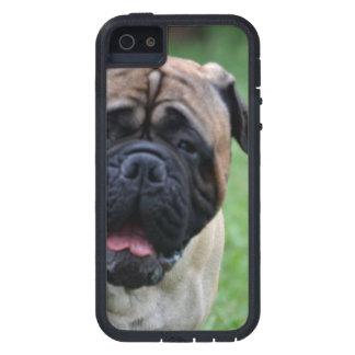 Cute Bullmastiff iPhone 5 Case
