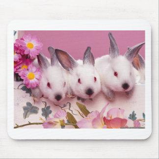 cute-bunnies-easter-wallpaper.jpg tapetes de ratones