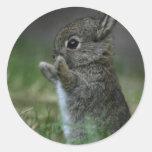 Cute Bunny Classic Round Sticker