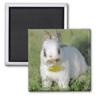 Cute Bunny great for Easter 2 Inch Square Magnet