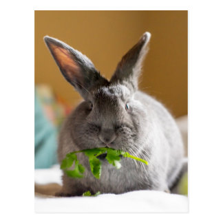 Cute Bunny Rabbit Eating Veggies Postcard