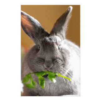 Cute Bunny Rabbit Eating Veggies Stationery