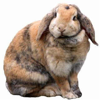 Cute bunny rabbit lop-eared photo sculpture