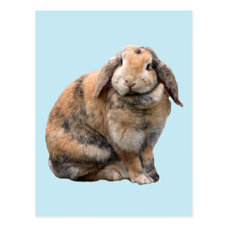 Cute bunny rabbit lop-eared postcard
