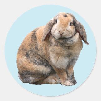 Cute bunny rabbit lop-eared stickers, gift idea