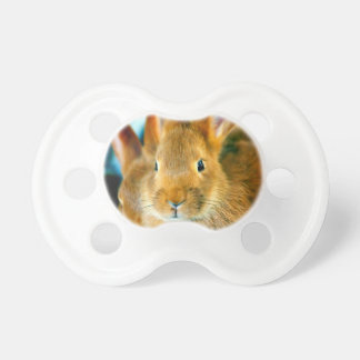 Cute Bunny waiting for mon and love Pacifiers