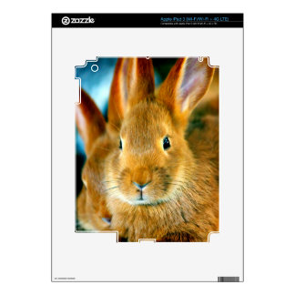 Cute Bunny waiting for mon and love iPad 3 Skins