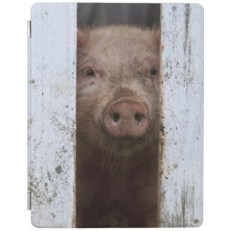 Cute But Sad Looking Baby Pig Looking Through iPad Cover