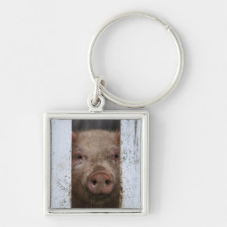 Cute But Sad Looking Baby Pig Looking Through Keychain