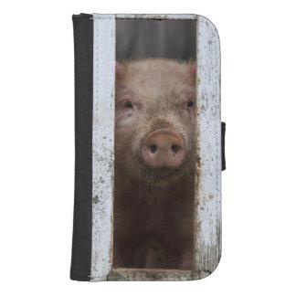 Cute But Sad Looking Baby Pig Looking Through Phone Wallet