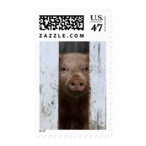 Cute But Sad Looking Baby Pig Looking Through Postage