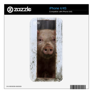 Cute But Sad Looking Baby Pig Looking Through Skin For iPhone 4S