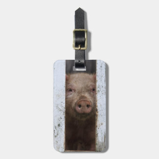 Cute But Sad Looking Baby Pig Looking Through Tag For Luggage
