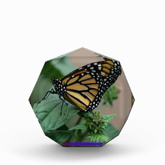 CUTE butterfly insect nature kids children family Award