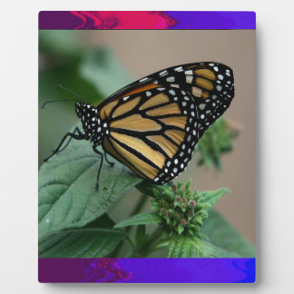 CUTE butterfly insect nature kids children family Display Plaque