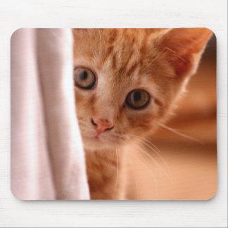 Cute Butterscotch Kitten Mouse Pad