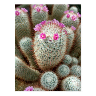 Cute Cactus w/ Pink Flower Face and Cacti Friends Postcard