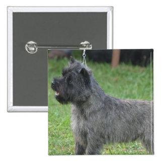Cute Cairn Terrier Buttons