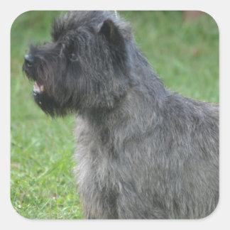 Cute Cairn Terrier Stickers