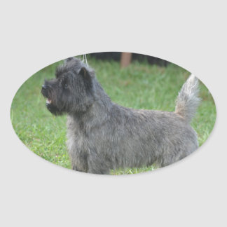 Cute Cairn Terrier Oval Stickers