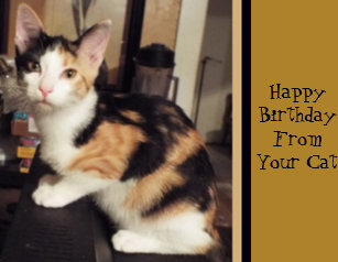 Cute Calico Cat Birthday Greeting Postcard