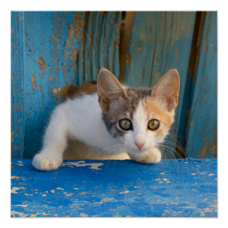 Cute Calico Cat Kitten Funny Curious Eyes Photo .. Poster