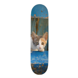 Cute Calico Cat Kitten Funny Curious Eyes Photo = Skateboard Deck