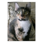 Cute Calico Cat, Purrfect Birthday Card