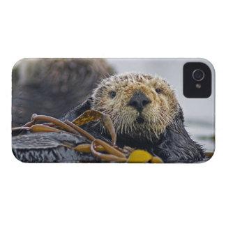 Cute California Sea Otter  Enhydra lutris iPhone 4 Cover