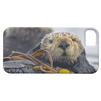 Cute California Sea Otter  Enhydra lutris iPhone 5 Cases