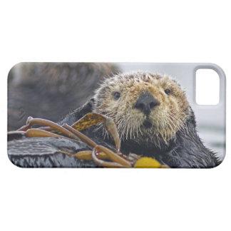 Cute California Sea Otter  Enhydra lutris iPhone SE/5/5s Case