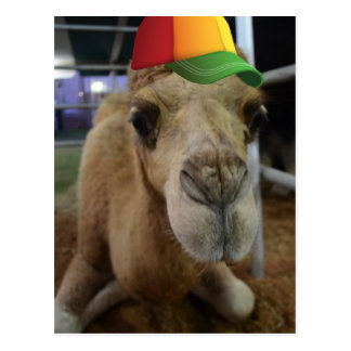 Cute Camel  with a beanie Postcard