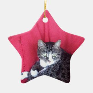 cute Cat Ally Ornaments