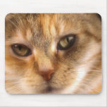 cute cat face 3 mouse pad