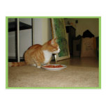 Cute Cat Going To Eat Post Card