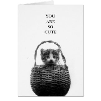Cute Cat in a Basket Vintage Photo Card