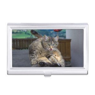 Kitty cat business card holders cases zazzle cute cat interrupted while grooming business card holder colourmoves