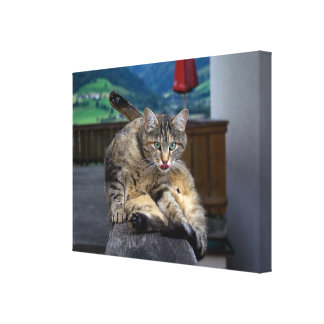 Cute Cat Interrupted While Grooming Canvas Print