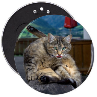 Cute Cat Interrupted While Grooming Pinback Button