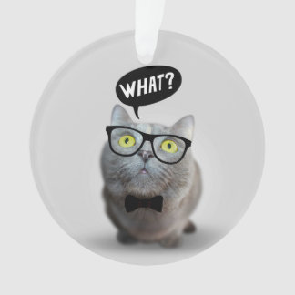 Cute Cat kitten with glasses what quote funny