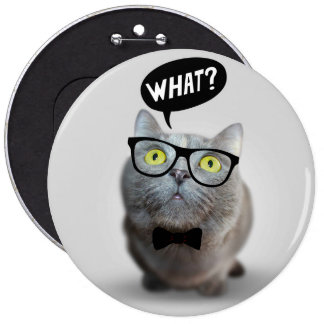 Cute Cat kitten with glasses what quote funny Pins