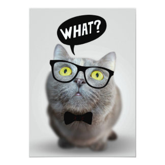 Cute Cat kitten with glasses what quote funny Announcements