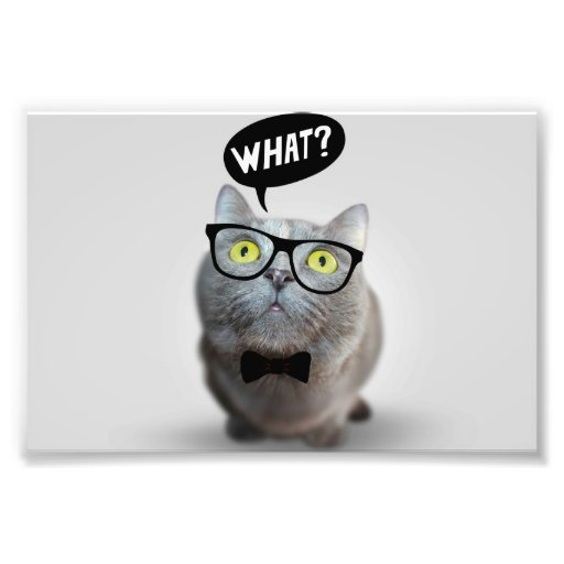 Cute Cat kitten with glasses what quote funny Photographic Print